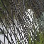 rizière-barrière
