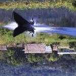 un Oiseau sur l'eau