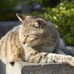 le chat de Monsieur Nakata