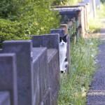 l'autre chat de Monsieur Nakata