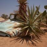 l'ananas et sa voiture