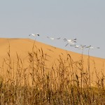 oiseaux ombres ou herbes